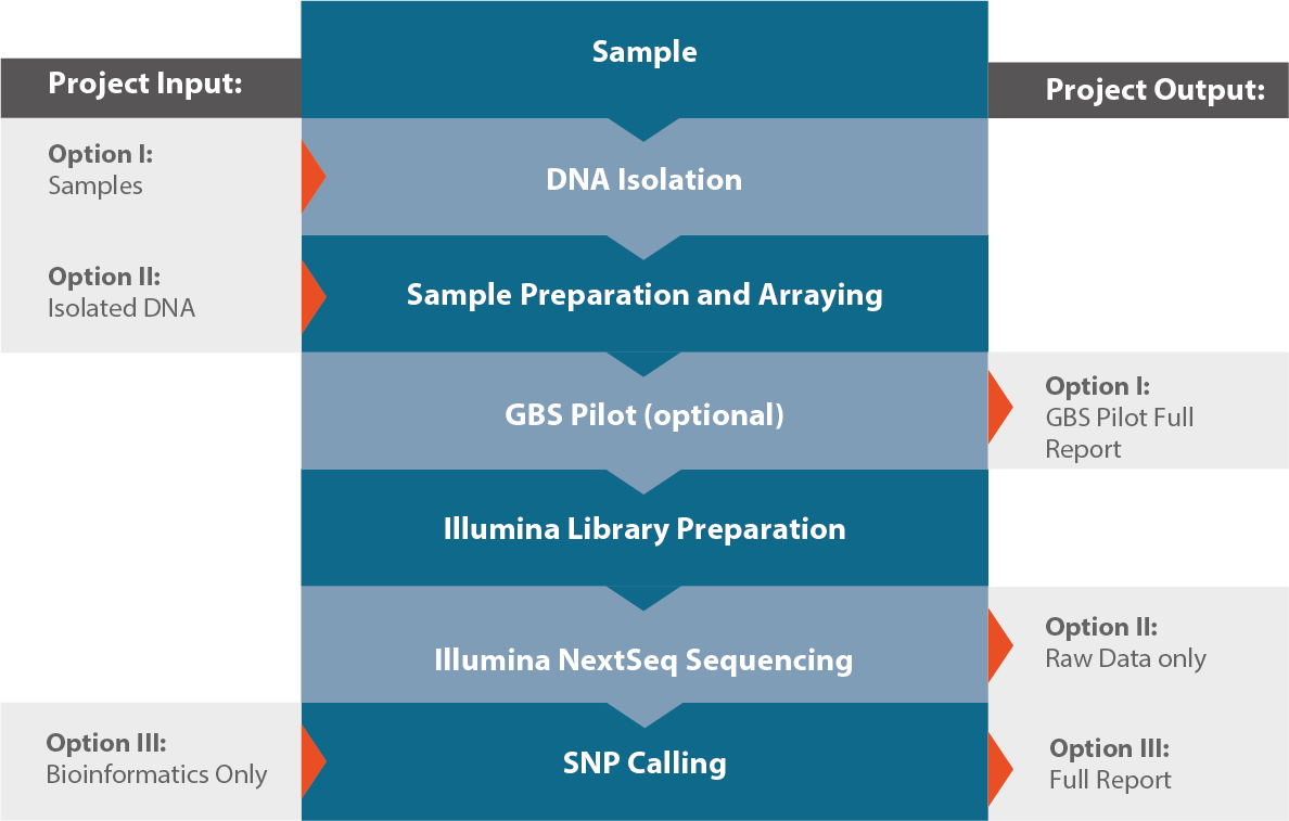 GBS, ddRAD, Genotyping by Sequencing